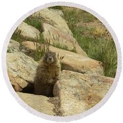 Rock Critter Round Beach Towel