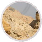 Rock Hyrax Procavia Capensis Round Beach Towel