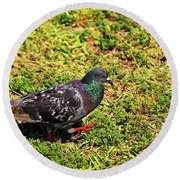 Rock Pigeon Round Beach Towel