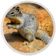Rock Squirrel Round Beach Towel