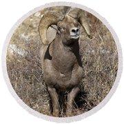 Rocky Mountain Big Horn Sheep Round Beach Towel