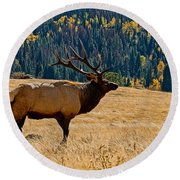 Rocky Mountain Bull Elk Round Beach Towel