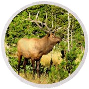 Rocky Mountain Elk Round Beach Towel