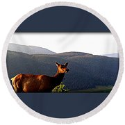 Rocky Mountain Elk Vi Round Beach Towel