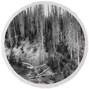 Rocky Mountain High Elevation Forest Large Panorama Round Beach Towel
