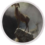 Rocky_mountain_sheep_or_big_horn,_ovis,_montana Round Beach Towel