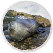 Roly Poly Seal Round Beach Towel