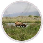 Roosevelt Elk 1 Round Beach Towel