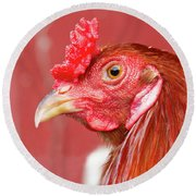 Rooster Close-up On A Reddish Background Round Beach Towel