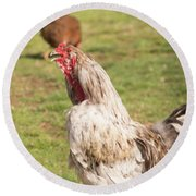 Rooster Crowing Round Beach Towel