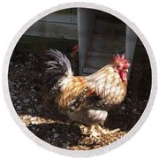 Rooster In A Coop Round Beach Towel