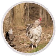 Rooster In The Woods. Round Beach Towel