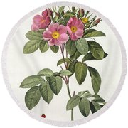 Rosa Carolina Corymbosa Round Beach Towel