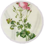 Rosa Centifolia Bipinnata Round Beach Towel