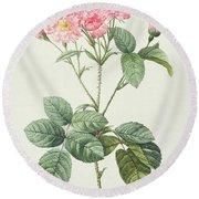 Rosa Centifolia Caryophyllea Round Beach Towel