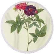 Rosa Gallica Purpurea Velutina Round Beach Towel