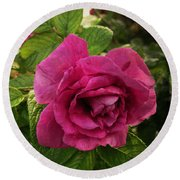 Rosa Rugosa Art Photo Round Beach Towel