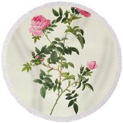 Rosa Sepium Flore Submultiplici Round Beach Towel by Pierre Joseph Redoute