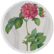 Rosa Turbinata Round Beach Towel by Pierre Joseph Redoute