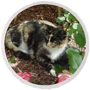Rose Bower For A Cat Round Beach Towel