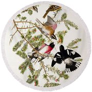 Rose Breasted Grosbeak Round Beach Towel by John James Audubon