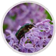 Rose Chafer On Lilac Round Beach Towel