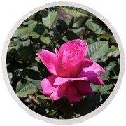 Rose In Flower Bed Round Beach Towel