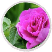 Rose In The Afternoon Round Beach Towel