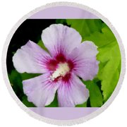 Rose Of Sharon Close Up Round Beach Towel