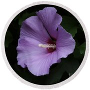 Rose Of Sharon - Hibiscus Syriacus Round Beach Towel