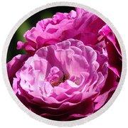 Rose Pink Purple Roses Flowers 1 Rose Garden Sunlit Flowers Baslee Troutman Round Beach Towel