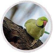 Rose-ringed Parakeet 04 Round Beach Towel