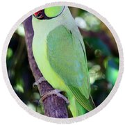 Rose-ringed Parakeet Round Beach Towel