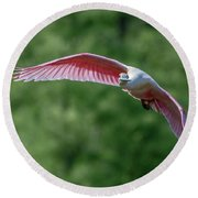 Roseate Spoonbill In Flight 2 Round Beach Towel