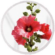 Roses Tremieres Round Beach Towel