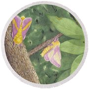 Rosy Maple Moth Gathering Round Beach Towel