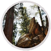 Round Meadow Giant Sequoia Round Beach Towel