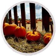 Row Of Pumpkins Sitting Round Beach Towel