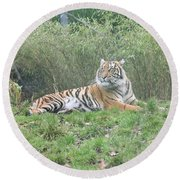 Royal Bengal Tiger Round Beach Towel