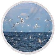 Royal Blue Ocean Tern Round Beach Towel