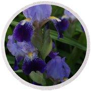 Royal Purple Iris's Round Beach Towel