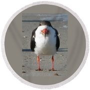 Royal Tern Round Beach Towel