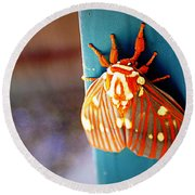 Royal Walnut Moth Round Beach Towel