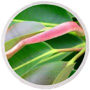 Rubber Tree - New Leaf Round Beach Towel