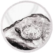 Rubbernecking Pond Turtle Round Beach Towel