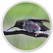 Rubbing Its Bill - Ruby-throated Hummingbird Round Beach Towel