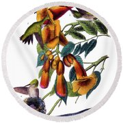 Ruby Throated Humming Bird Audubon Birds Of America 1st Edition 1840 Octavo Plate 253 Round Beach Towel
