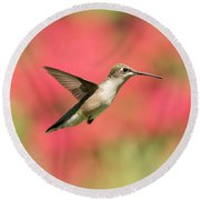 Ruby Throated Hummingbird 2016-6 Round Beach Towel