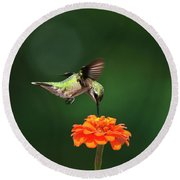 Ruby Throated Hummingbird Feeding On Orange Zinnia Flower Round Beach Towel by Christina Rollo