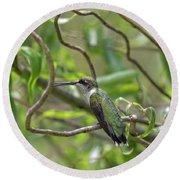 Ruby-throated Hummingbird - Female Round Beach Towel